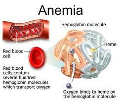 obat-alami-anemia-2